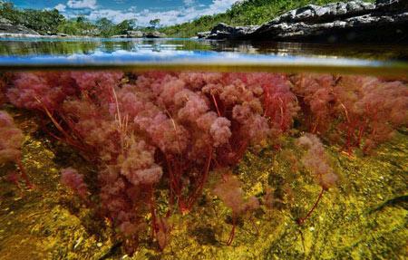 رودخانه,رودخانه 5 رنگ در کلمبیا,عجایب طبیعت