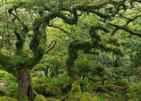 گردشگری: جنگل اسرارآمیز ویستمن در انگلیس