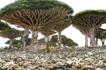 جزیره سوکوترا, جزیره سوکوترا در اقيانوس هند, سوکوترا