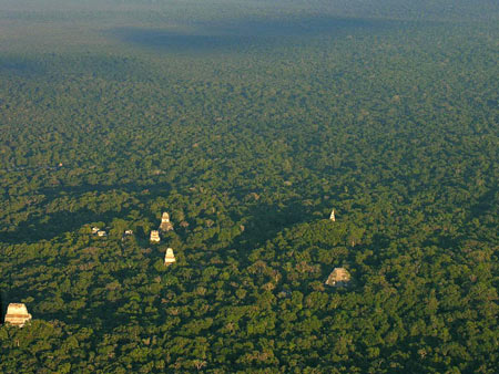 جنگل تیکال,جنگل تیکال در گواتمالا,تمدن مایا ها