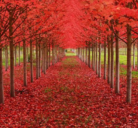 زیباترین درختان جهان,شگفت انگیز ترین درختان جهان,عجایب طبیعت