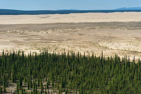 پارک ملی کوبوک,پارهای طبیعی,جنگل های سردسیر آلاسکا