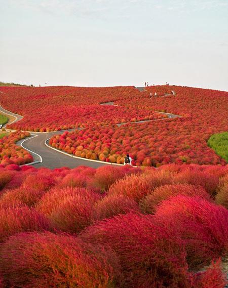 جاده,جاده های رویایی,تصاویر جاده های شگفت انگیز