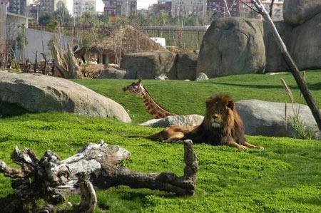 باغ وحش, باغ وحش بیوپارک والنسیا, بهترین باغ وحش های دنیا