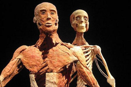 موزه,عجیب ترین موزه جهان,موزه اجساد انسان در برلین