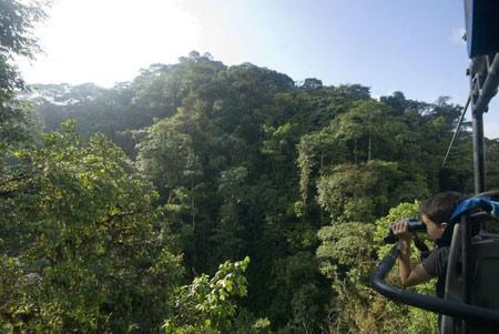 دوچرخه سواری,جنگل,دوچرخه سواری بر روی جنگل