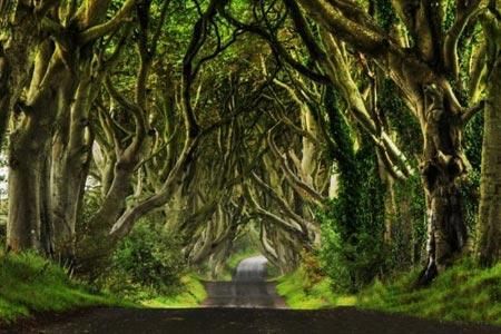 تونل درختی,تونلی از جنس درخت در ایرلند،مکانهای دیدنی ایرلند