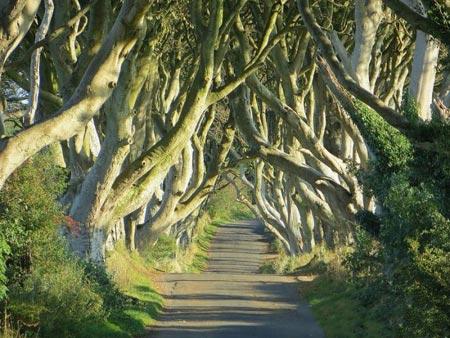 تونل درختی,تونلی از جنس درخت در ایرلند,مکانهای دیدنی ایرلند