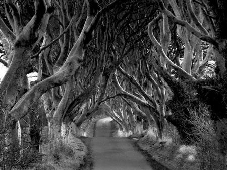 تونل درختی,تونلی از جنس درخت در ایرلند,عجایب طبیعت