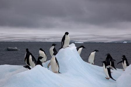 جاذبه های طبیعی شگفتانگيز,قاره قطب جنوب, جاذبه های گردشگری