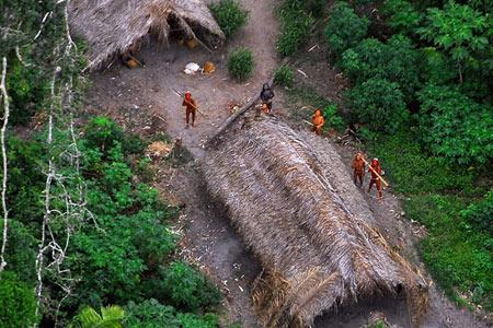 جنگل آمازون,حیوانات عجیب جنگل آمازون, جنگل های آمازون