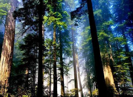 جنگل آمازون,جنگل های آمازون,جنگل آمازون کجاست