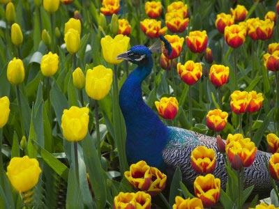 باغ,باغهای حیرت انگیز از سراسر دنیا,باغهای بوتچارت,مشهورترین باغهای دنیا-www.tudartu.ir
