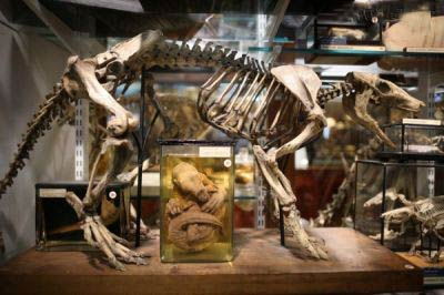 موزه جانور شناسی,عجیب ترین موزه جانور شناسی دنیا