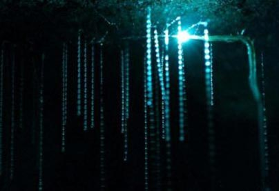 غار,غار وايتومو گلوورم,عجایب گردشگری