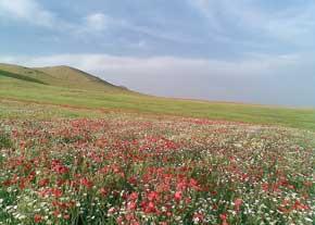 جاذبه گردشگری ایران,گردشگری ایران