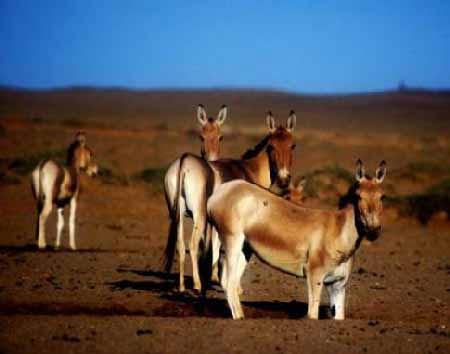 سفر به آفریقای ایران