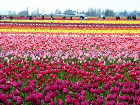 هلند,مکانهای دیدنی هلند,جاهای دیدنی هلند