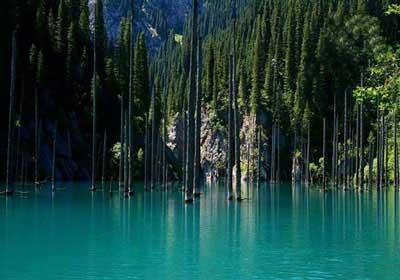 جنگل,جنگل های ایران,جنگل های جهان