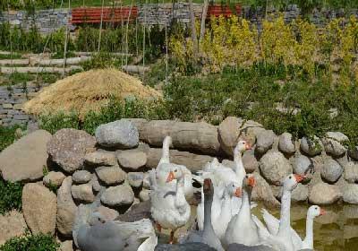 باغ پرندگان تهران,باغ پرندگان