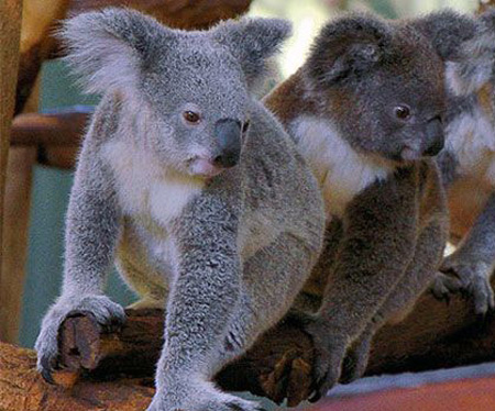 10 جاذبه متفاوت استرالیا