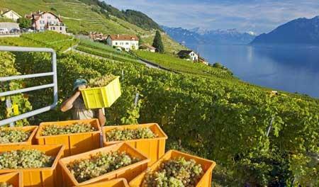 لاواکس,سوئیس,دیدنیهای سوئیس