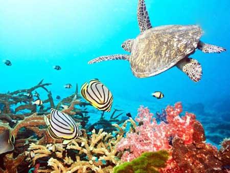 مکانی که پیش از نابودی باید ببینید, پشته بزرگ مرجانی
