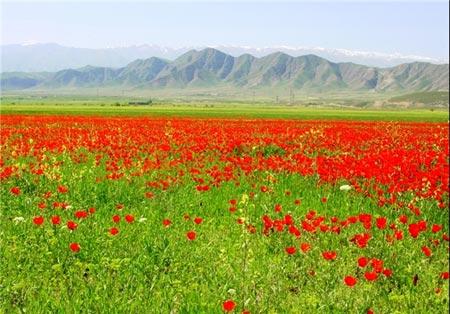 جلوهای از نقش و نگار بهار در طبیعت زیبای تاجیکستان+تصاویر