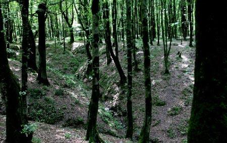پارک جنگلی امام رضا,پارک جنگلی