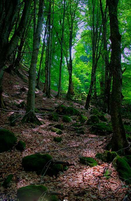 جنگل هلی دار,گردشگری,تور گردشگری