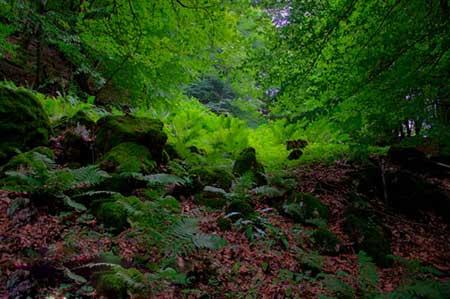 جنگل هلي دار,گردشگري,تور گردشگري
