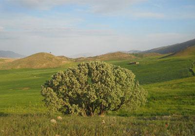 طبیعت چرداول,ایلام,مکانهای تفریحی ایلام