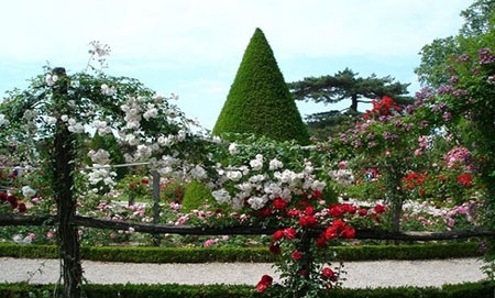 ir3146 4 - زیباترین باغهای جهان + عکس