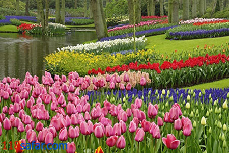 ir3146 - زیباترین باغهای جهان + عکس