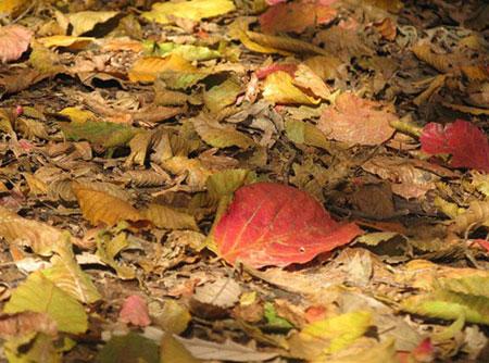 تصاویر پارک گیسوم, پارک جنگلی گیسوم
