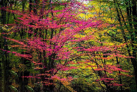 پارک جنگلی النگدره،تصاویر پارک جنگلی النگدره
