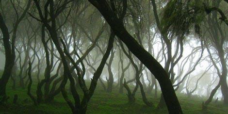 جنگل,زیباترین جنگل های جهان