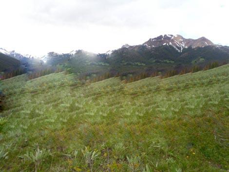 تشکیل جنگل های ابر,زیباترین جنگلهای ابر