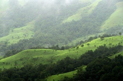 جنگل ابر, تشکیل جنگل های ابر