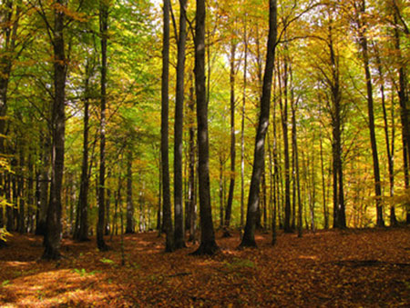 پوشش گیاهی جنگل راش,مسیر دسترسی جنگل راش