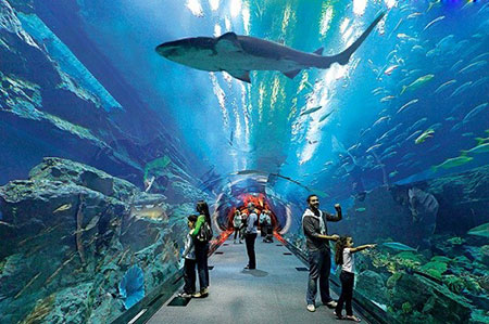 آکواریوم دبی، یکی از بزرگترین آکواریوم های جهان