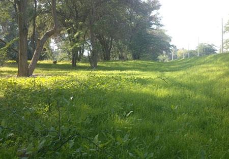 پارک جنگلی چاهکوتاه,پارک جنگلی چاهکوتاه بوشهر