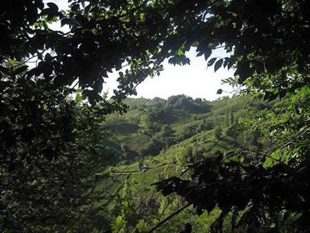 عکس های منطقه ییلاقی لیلاکوه,شمال