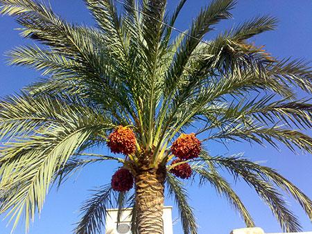 جاذبه های گردشگری بوشهر,سفر به بوشهر,صنایع دستی بوشهر