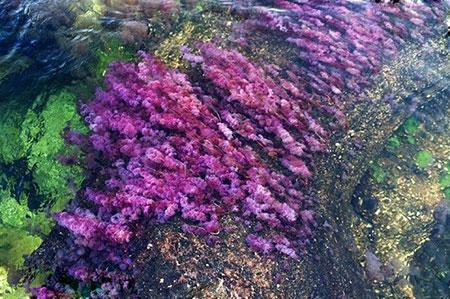 رودخانه رنگین کمان کانو کریستال