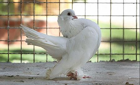 ,باغ پرندگان,بزرگترین باغ پرندگان ایران