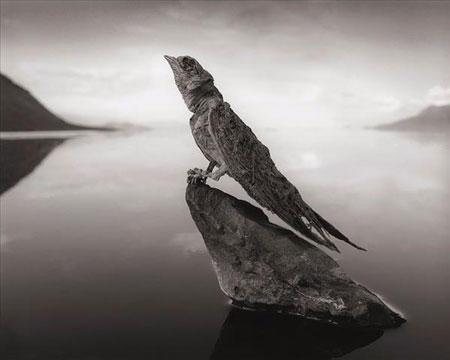 ,تصاویر دریاچهی نمک ناترون