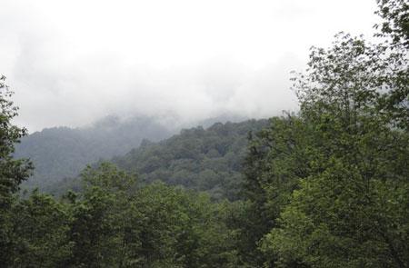 جالبترین جنگل های ایران
