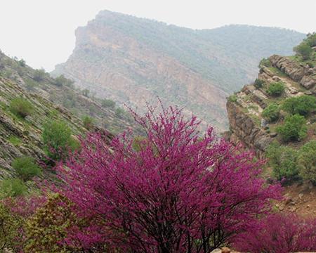 تنگه ارغوان در استان ایلام