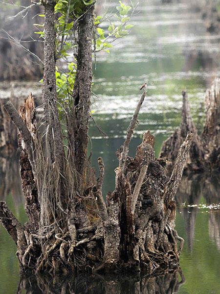 تصاویر دریاچه ممرز,دریاچه ممرز در نوشهر